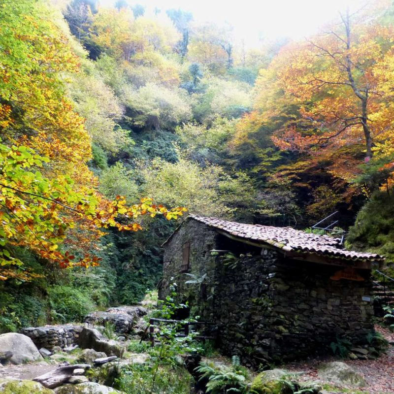 Moulin en automne